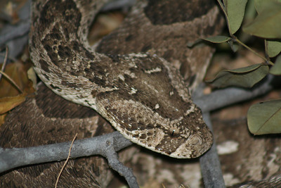 Puff adder, lion cubs and more