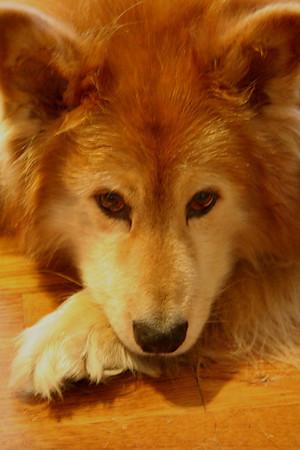 Dogs (Killian, Barley, Sasha)