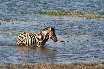 More of Chobe National Park